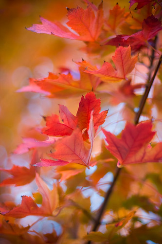 More fall leaves...