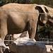 San Diego Zoo 097