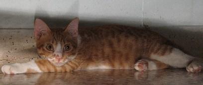 KittyBoy_20071230_03x