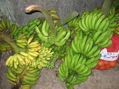 Plátanos (plantains)