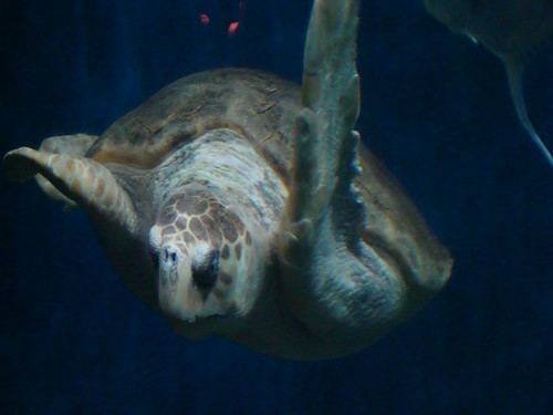 VA Aquarium2008