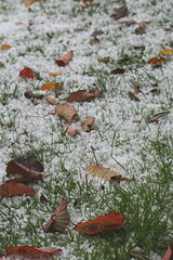 Hail on my lawn in October