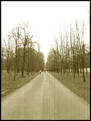 Il buon vecchio parco [Empty Spaces]