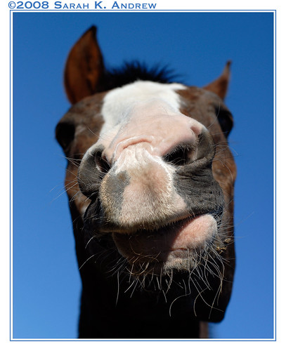 Why the long face?