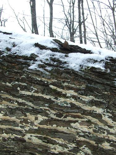 snow and fungus log