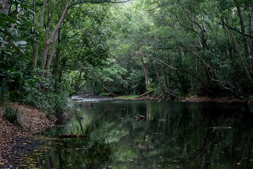 Freshwater Creek, Cairns
