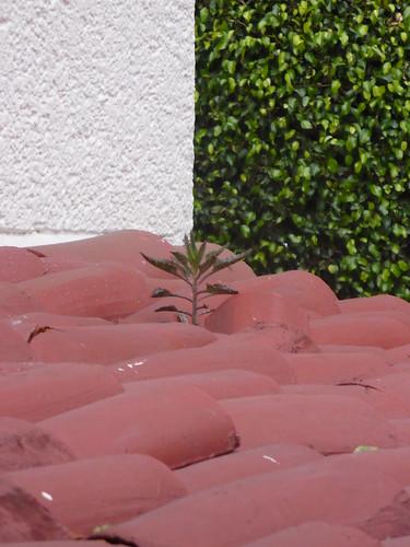PLANTA EN EL TEJADO