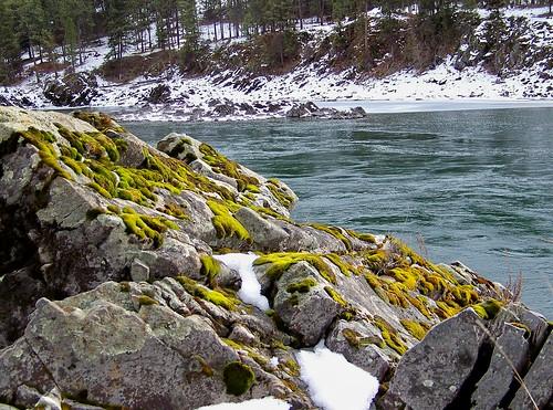 Winter moss