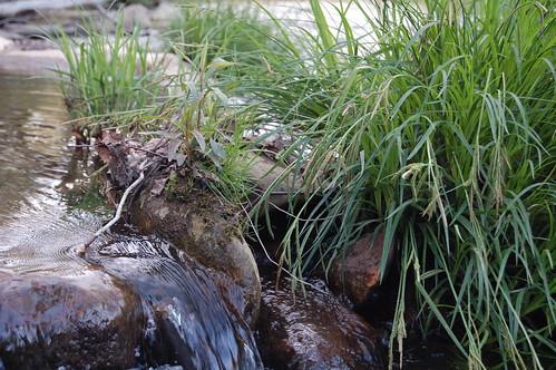 Creek at Miracle Farm B&B, Floyd Va