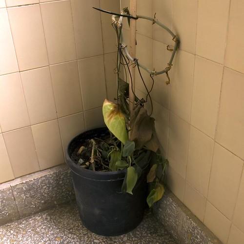 planta reseca esquina15x15