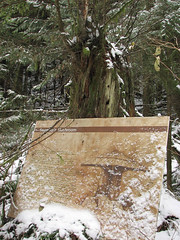 Baden-Powell Trail, 1 Dec 2007