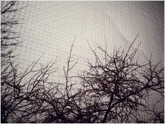 02.13.08 {icy skies}