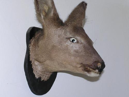 Deer in the headlights.JPG