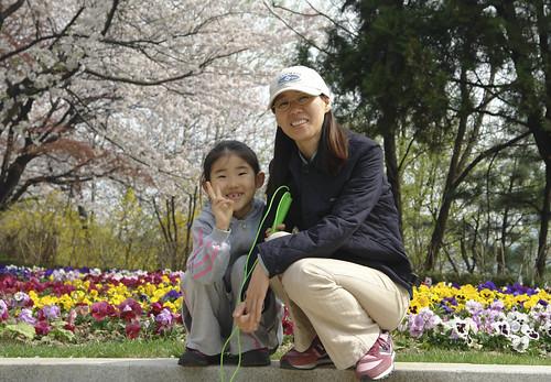 남산벚꽃축제