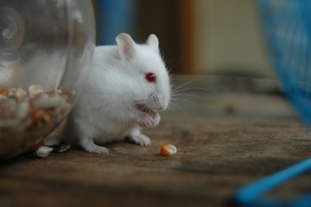 Hamster-08