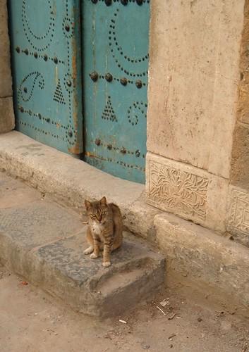 Cat in Tunis