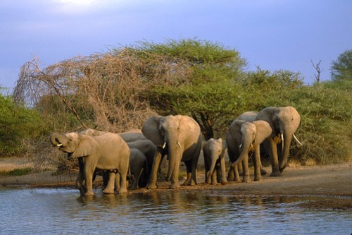 Kruger National Elephants, South Africa