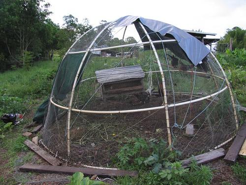 Chicken Dome