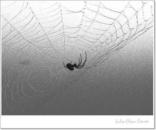 Meciéndose en la red by Julio César Correa