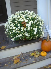 Fall mums and pumpkins on the front porch
