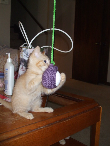 Cat toy by you.
