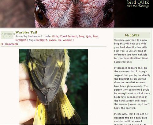 birdQUIZ blog