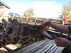 Giraffe Wanna Cracker
