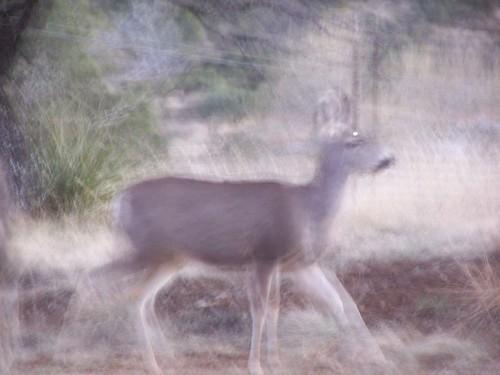 Deer in motion...