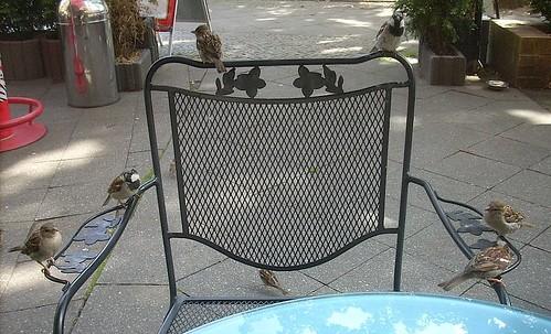 Haussperlinge auf Stuhllehne