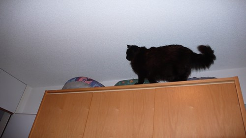 cat walk 5