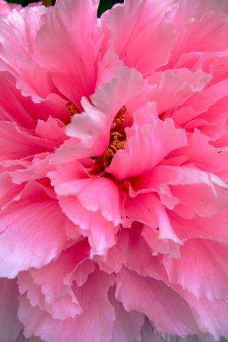 Pink close
