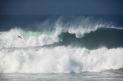 Breaking Waves and Pelican