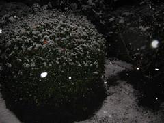 yuck snow! 004