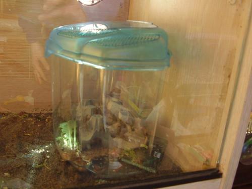reptile corner 03 - crickets