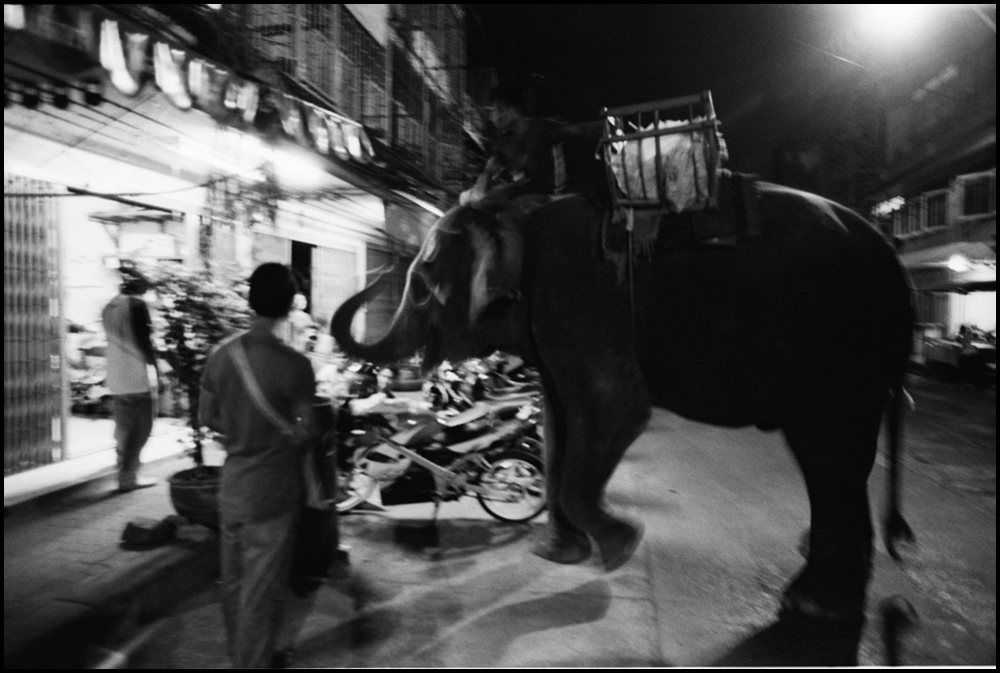 Elephant tragedy