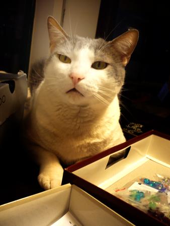 #203 - Cat questions