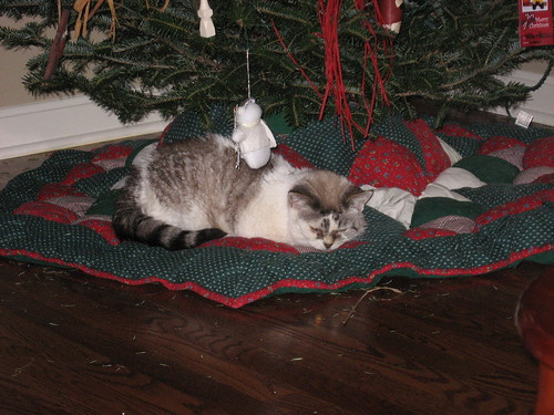 giz under the tree