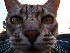 Nosy Cat