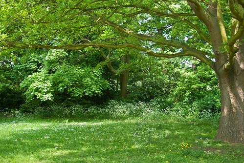 Bedford Park _G104142
