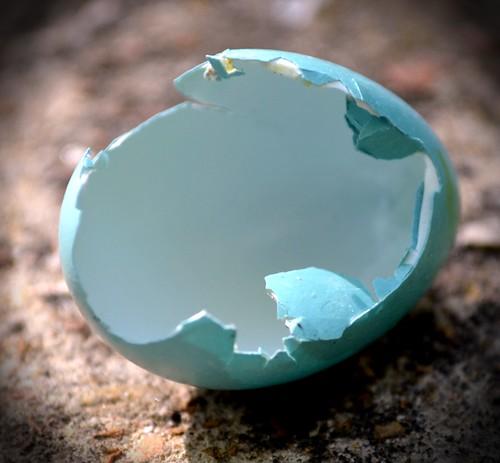 egg shell 4