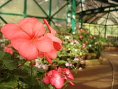 Botanical Garden, Ooty, Nilgiri