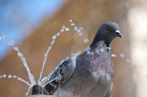 La paloma curiosa