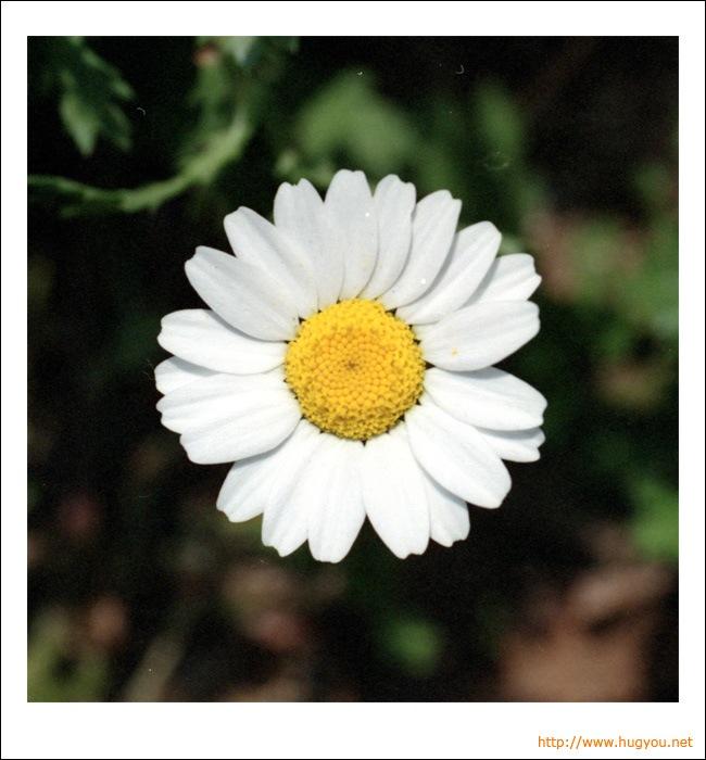 20080525_flower.jpg