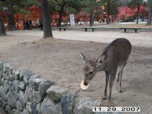 ha! Got a deer biscuit