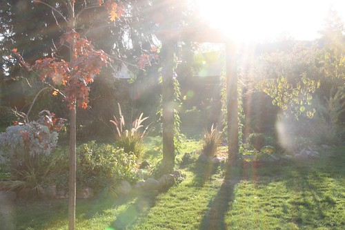 More Lens Flares in my Garden