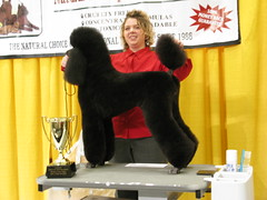 Dog Grooming Show  by white dog
