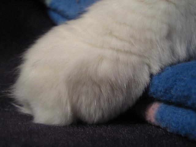 Ping's White Paw