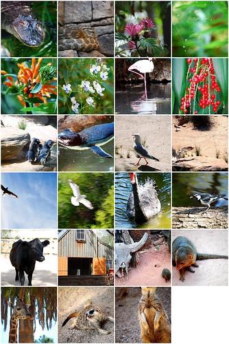 Adelaide Zoo Trip - 10th Mar 08 MOSAIC