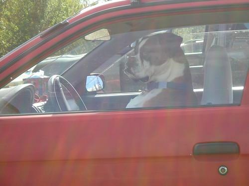 Me Wantz Drive Thru Cheezeburger!