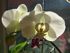 Sunlight - finally!